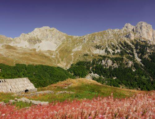 Katuni Kučkih planin